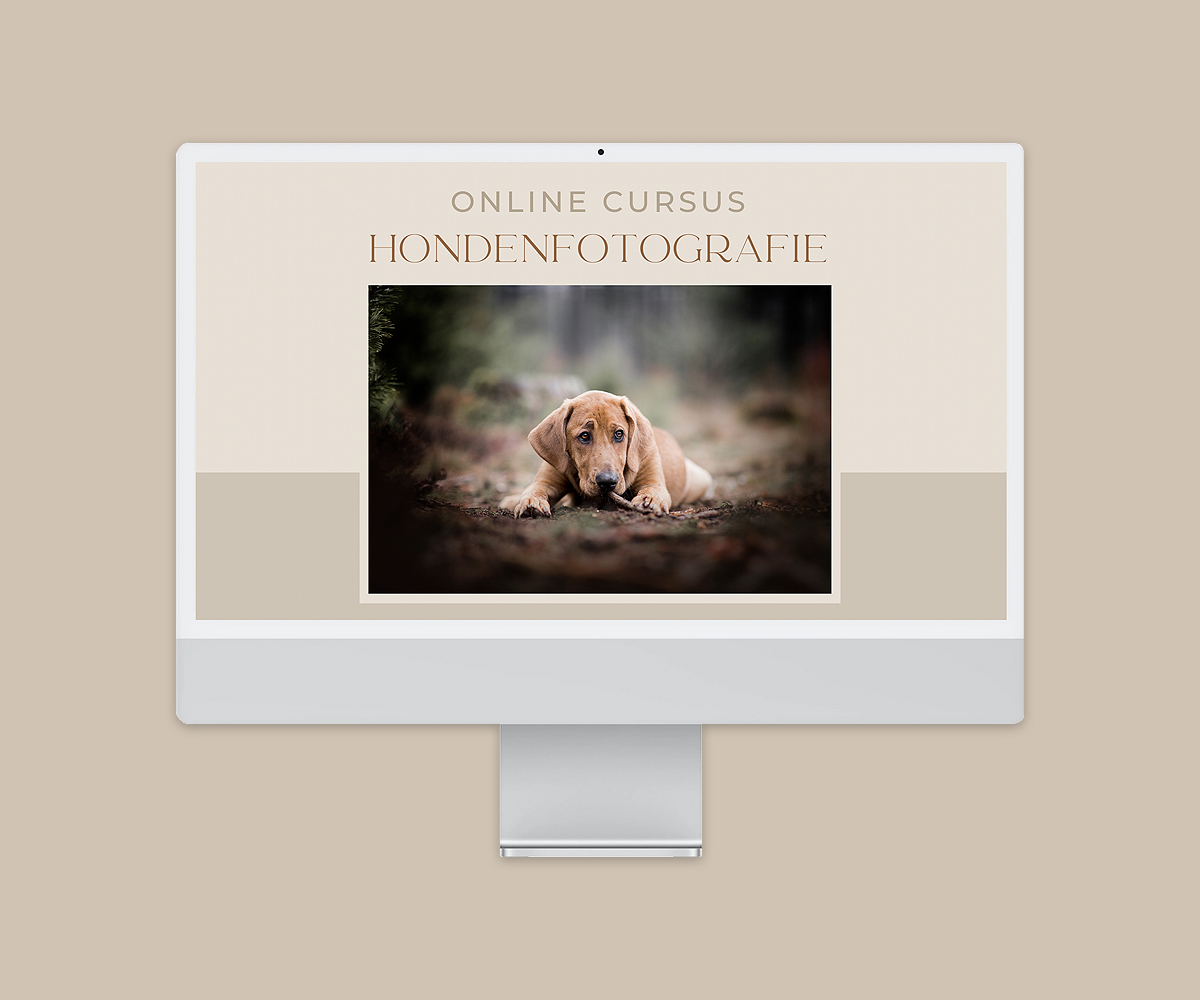 online cursus hondenfotografie hondenfotograaf fotoshoot hond tips training workshop