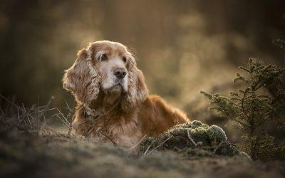 10 Tips om je hond op de foto te zetten