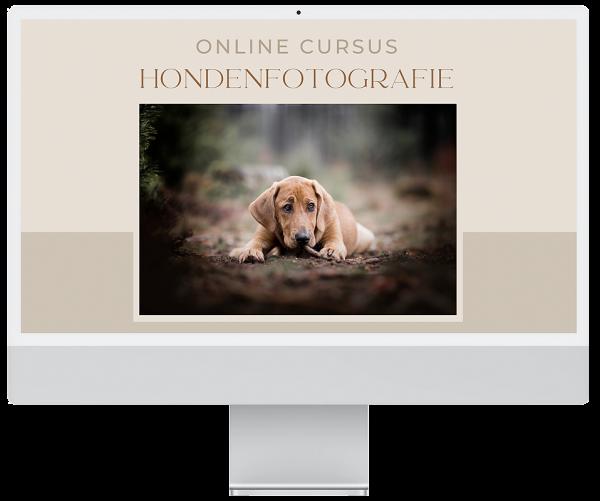 online cursus hondenfotografie hondenfotograaf hondenfoto hond tips mooi portret outdoor buiten online training